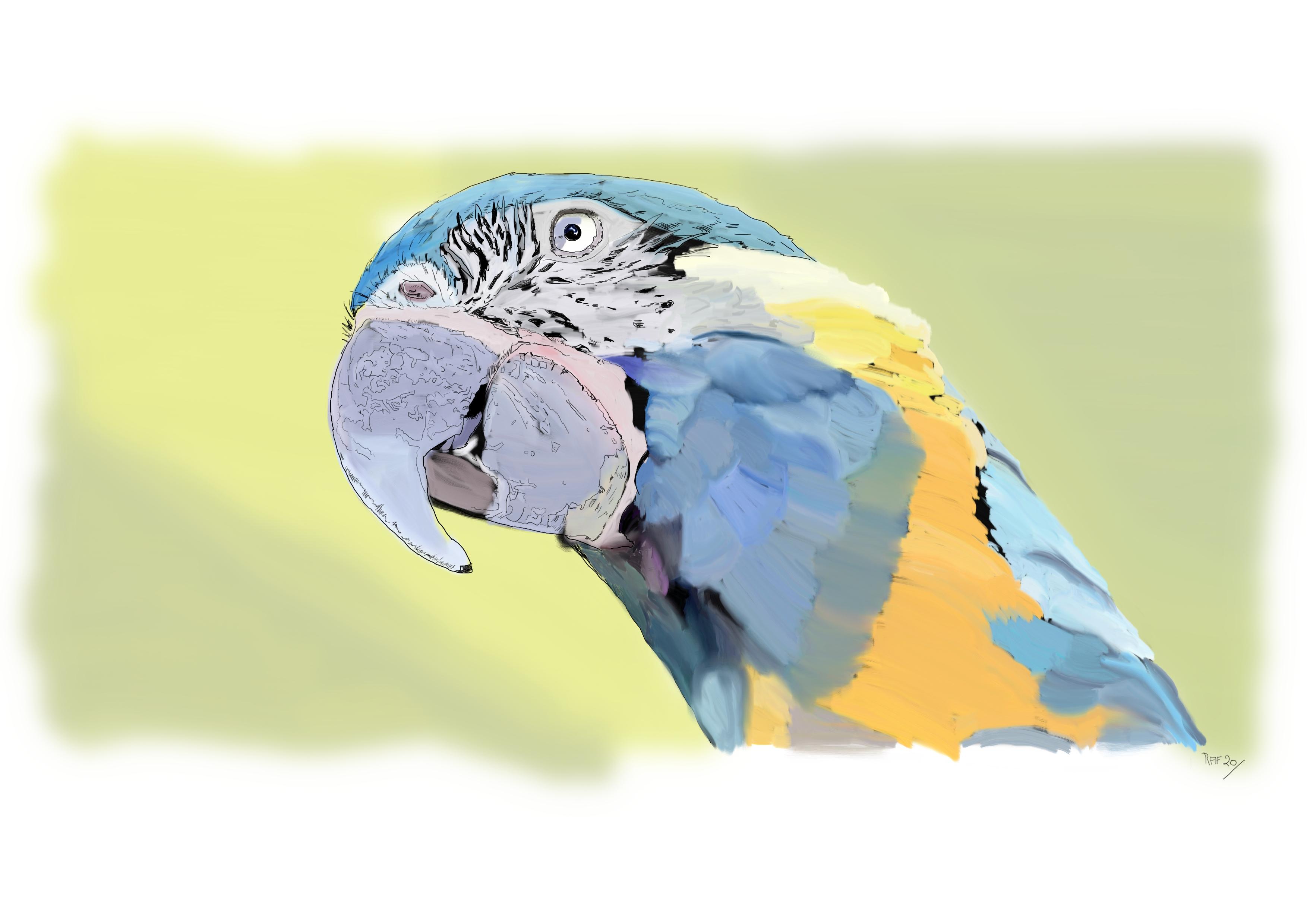 Ara canindé-ara-gorge-bleue