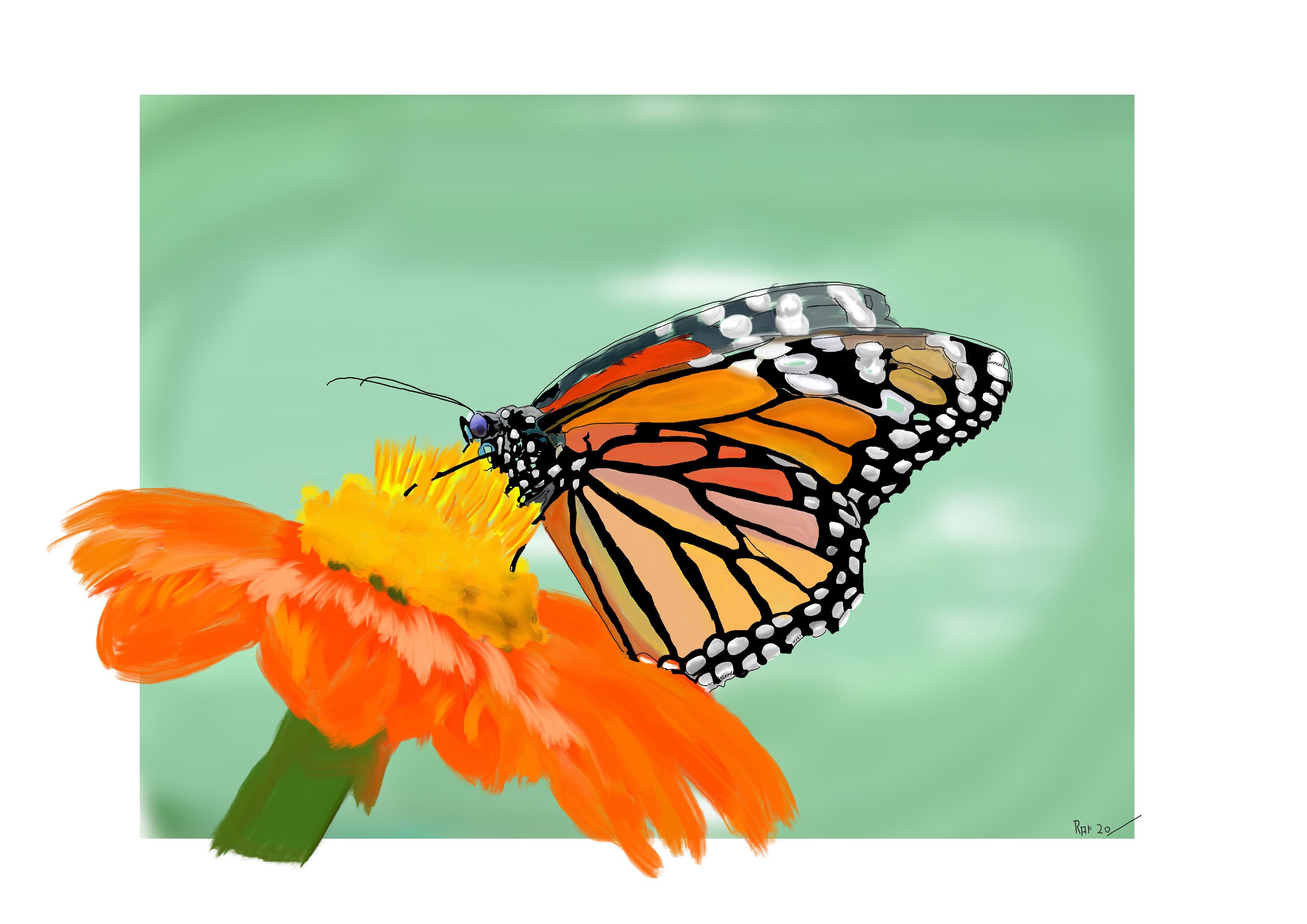 Papillon Empereur
