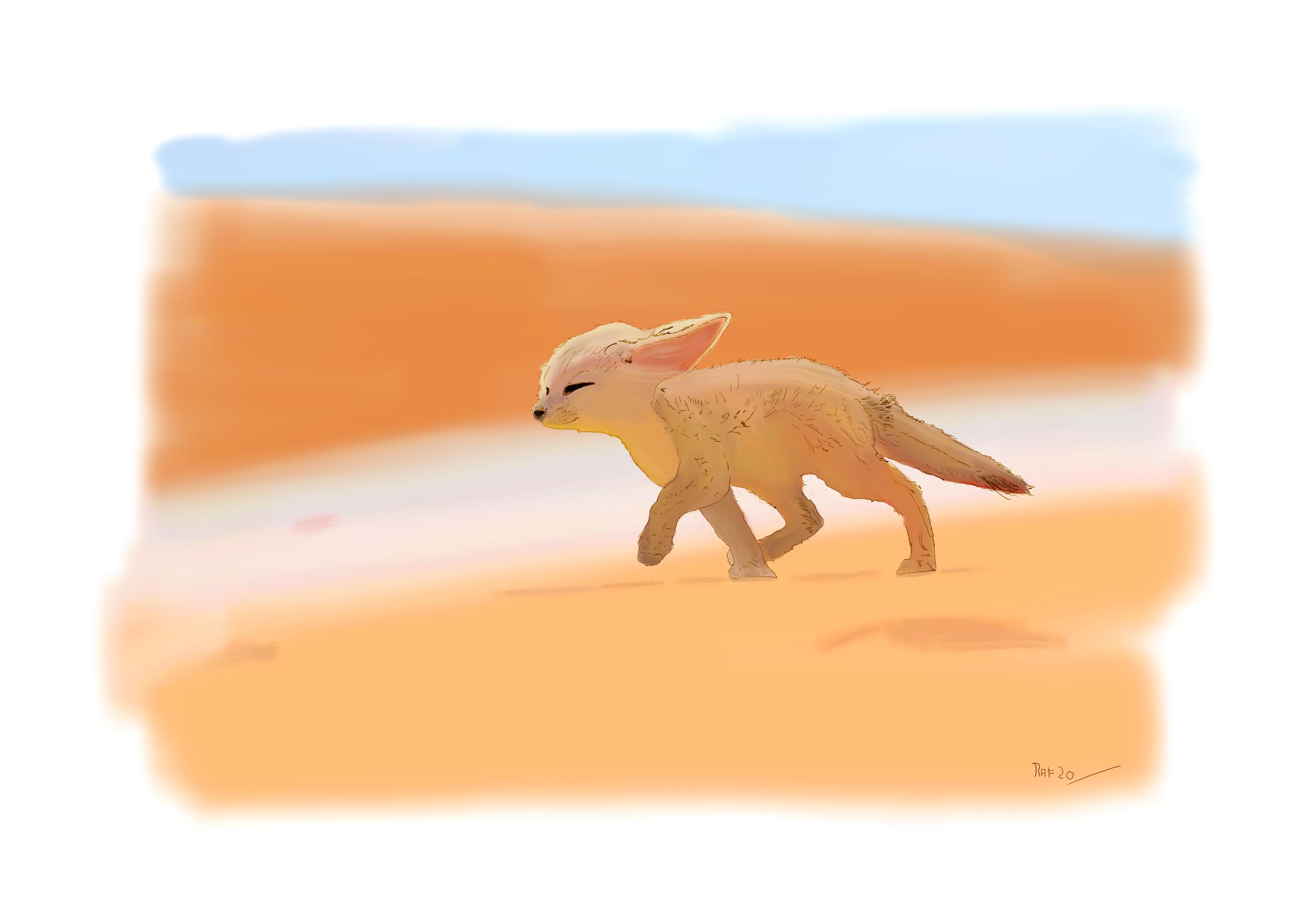 Fenec du desert
